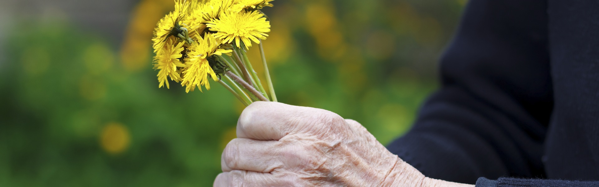 Close up of wrinkled hands holding a yellow flower